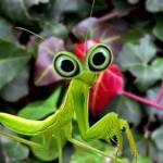 wrinkle bug